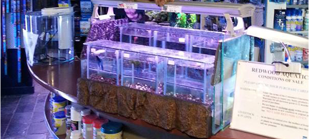 Tropical Fish, Goldfish, Aquariums| Redwood Aquatics